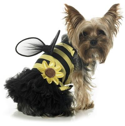 Dog Custume - Bee